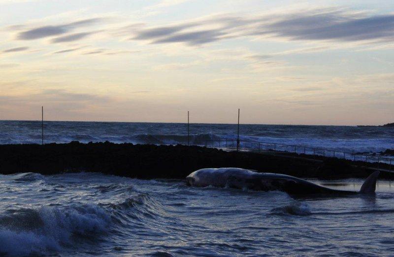 Bagno Balena Marina Di Pisa : Balena spiaggiata a rosignano «acque toscane eccellenti. esclusa l