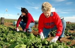 In Toscana le donne chiedono più risorse per il settore agricolo