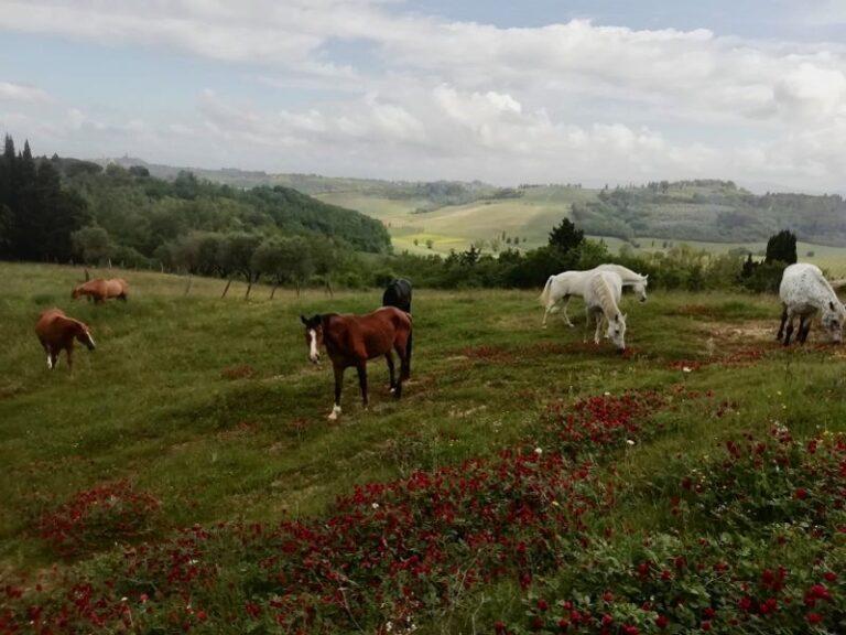 Cavalli sieropositivi trovano casa a Corniano, Ihp: «Grazie alle nostre battaglie possono vivere liberi»